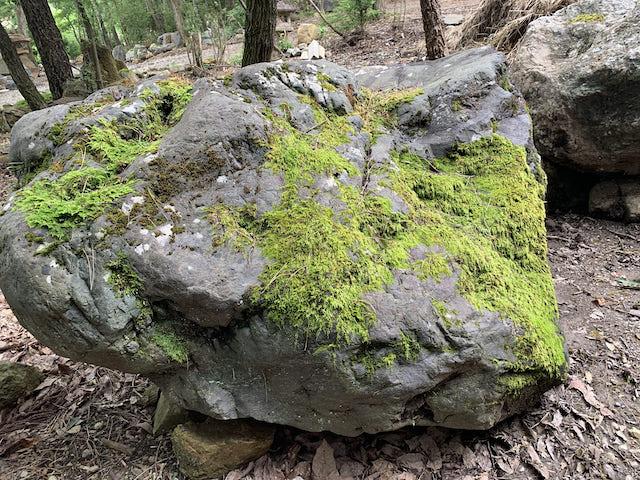 吉野石の景石