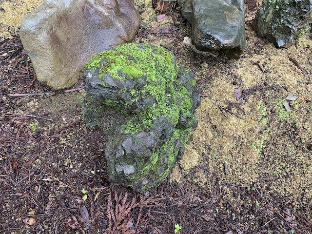 苔の生えた貴船の小石