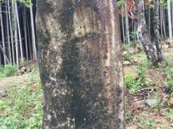石碑用の立石