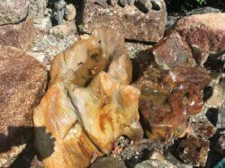 木化石の水掘れ石