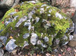京北町のチャート石