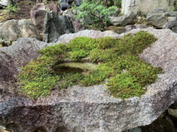 古丹波石の水鉢